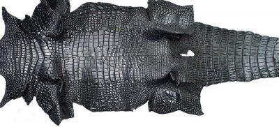 alligator skin
