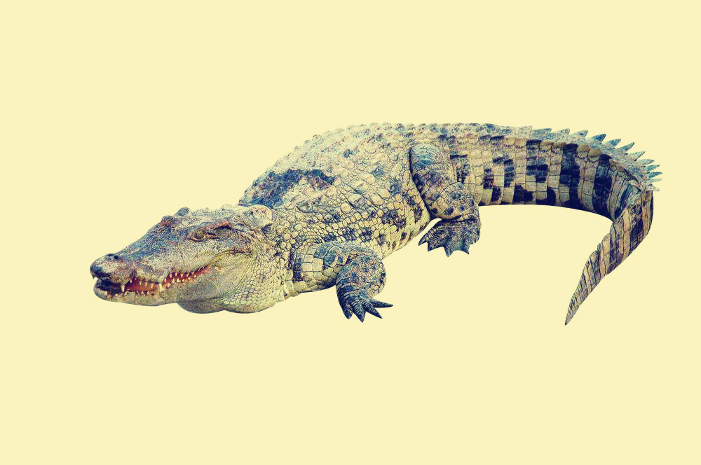 Crocodile-Ancient Animal